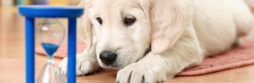 hondenspeelgoed denkspel