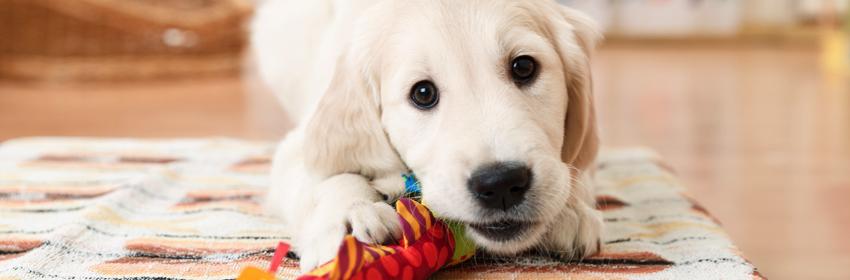 hondenspeelgoed kauwspeelgoed
