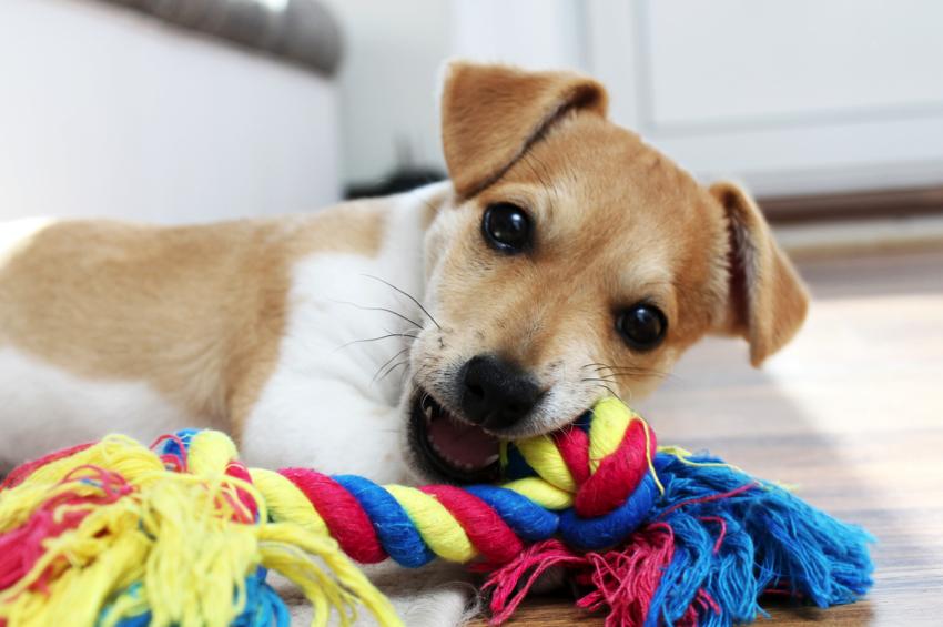 hondenspeeltjes kopen online