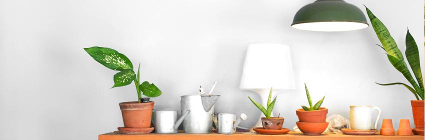 verzorgen kamerplanten