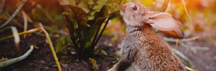 tips voor een diervriendelijke tuin konijn