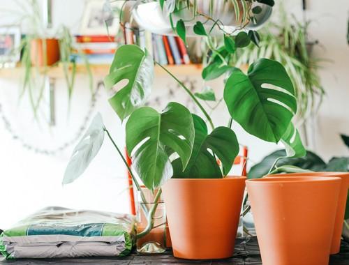 in huis plantenhoek