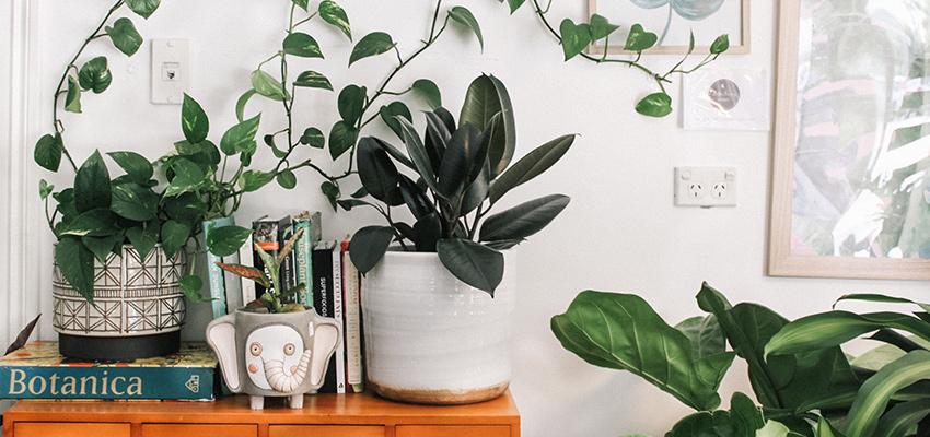 planten in plantenhoek