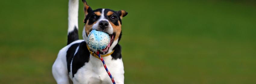 hondenspeelgoed bal