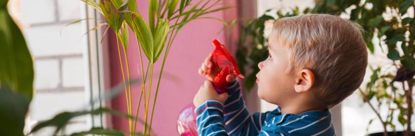 kamerplanten verzorgen verstuiven