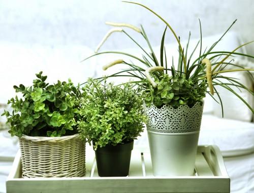 verzorgen kamerplanten tips